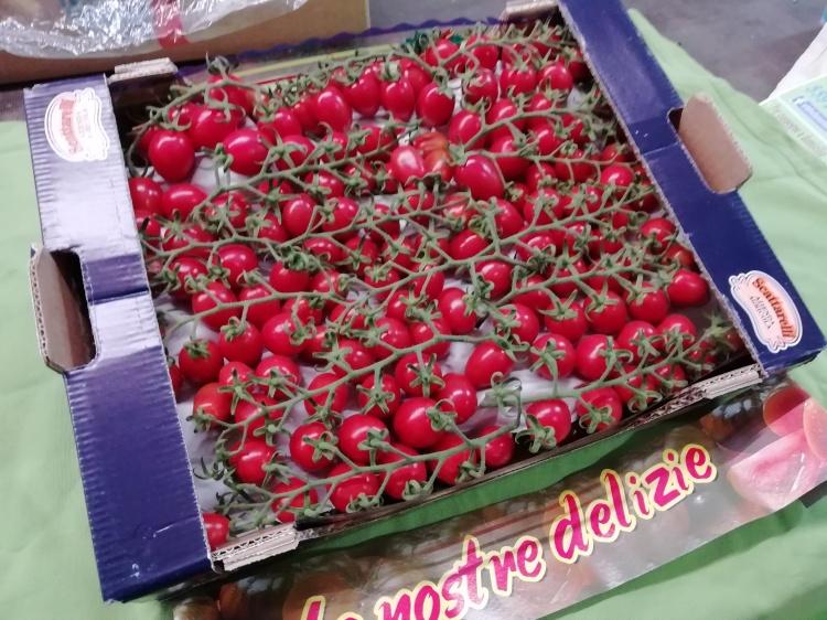 Pomodori Datterini  Sicilia