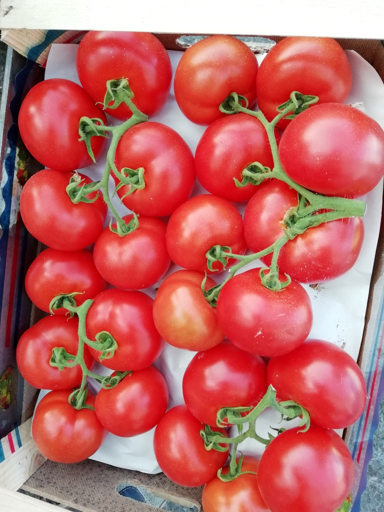 Pomodori a grappolo Italia .